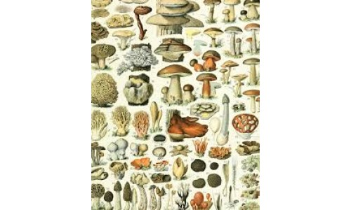 Infopedia : All about Mushrooms -The best of all is here for you!!!